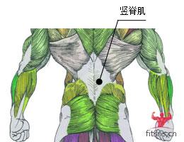 竖脊肌_腰腹部_背屈伸(山羊挺身)_竖脊肌-健身之家