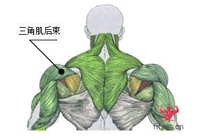 三角肌后束
