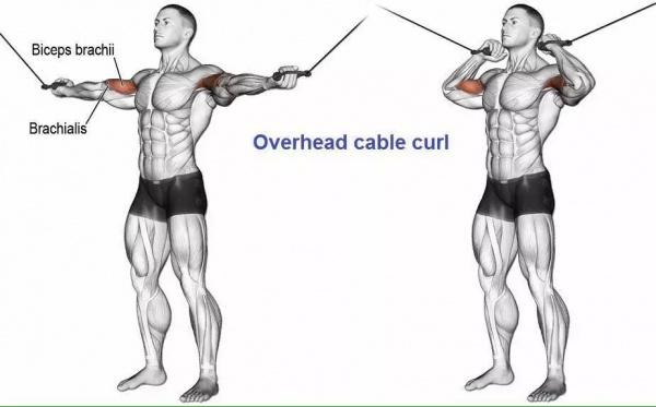 最全的肱二三头肌训练图解,漂亮手臂必备!