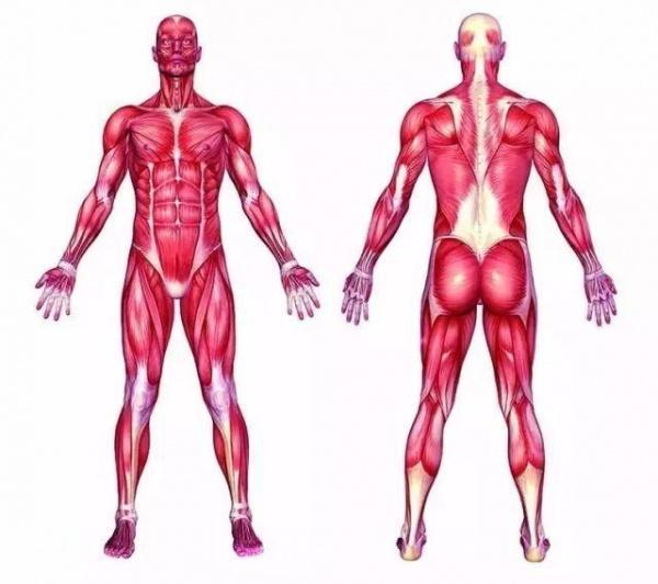 增肌的原理,90%的健身者都不懂!