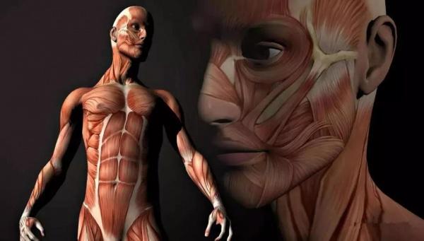 肌肉生长的过程,认真看完相当于上了一节私教课!