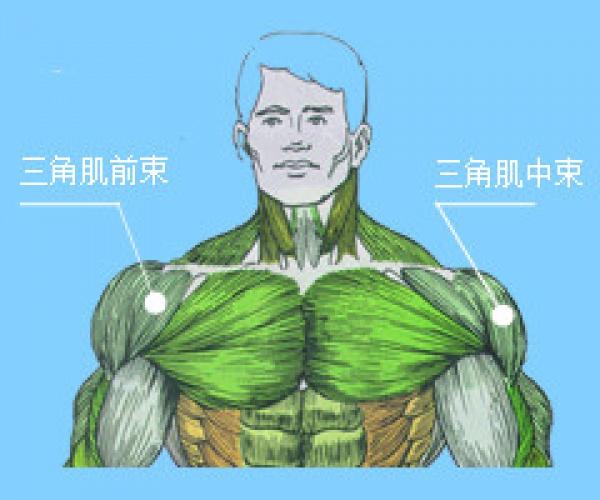 关于三角肌(肩部肌肉)锻炼方法