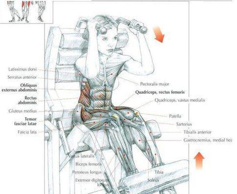 健身房练腹肌的器械有哪些?