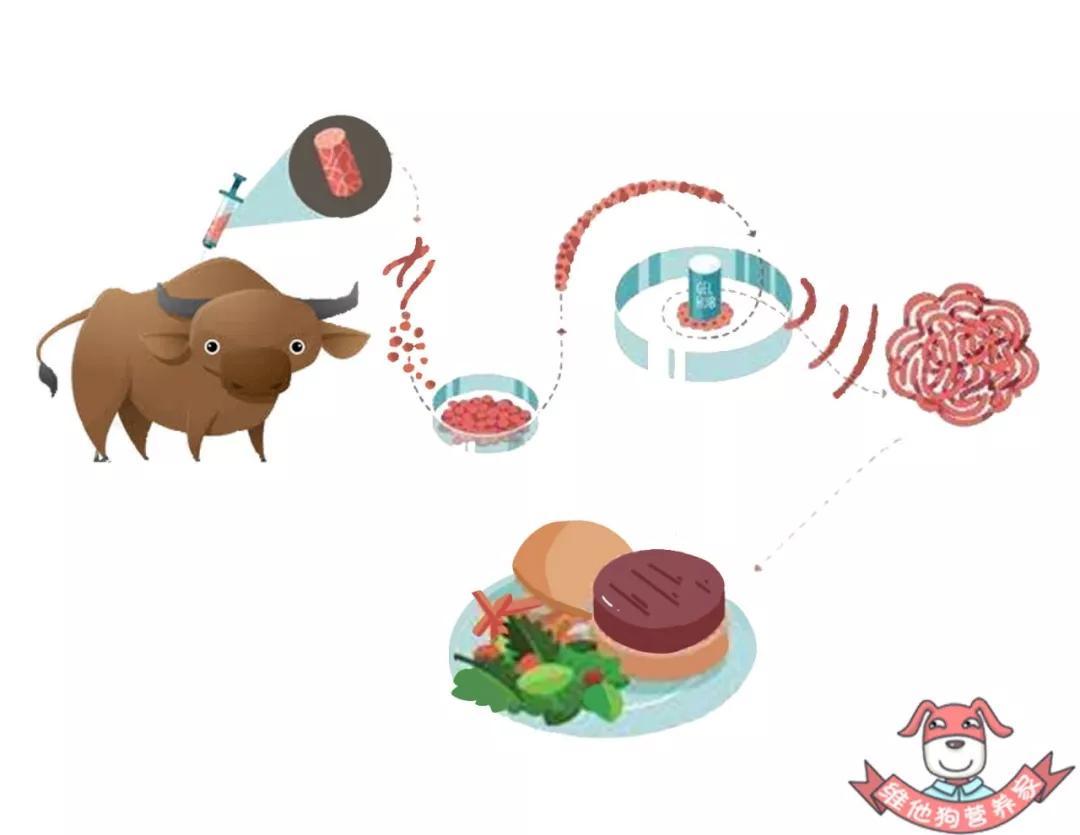 """差别于素肉的""""人造肉""""或将上市,实行室造出来的肉你敢吃吗?"""